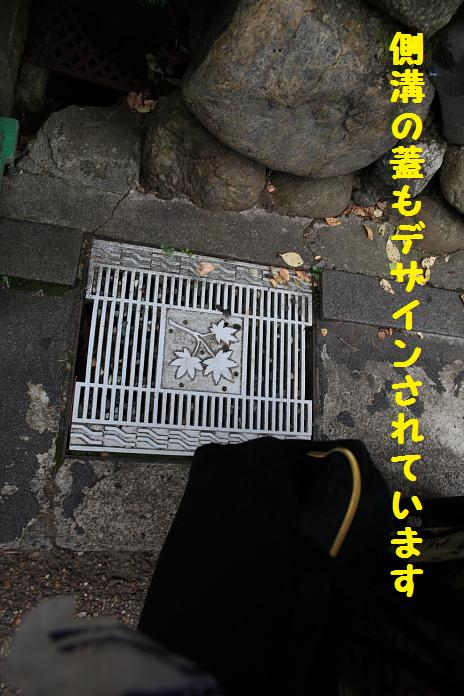 IMG_83612010.jpg