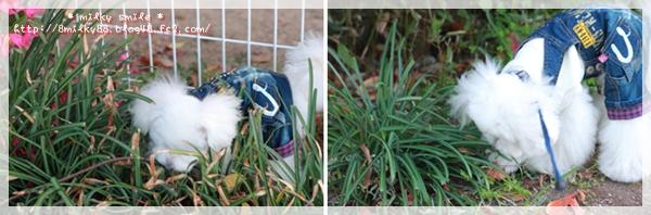 cats_20111216120810.jpeg