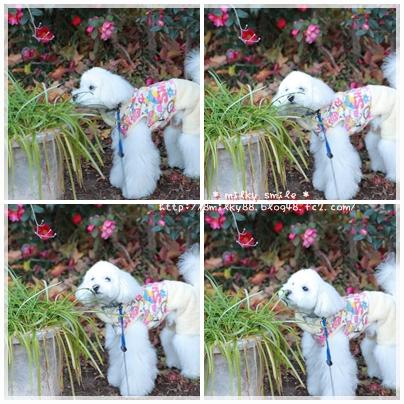 cats_20120105082701.jpeg