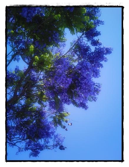 2011-05-31_114150.jpg