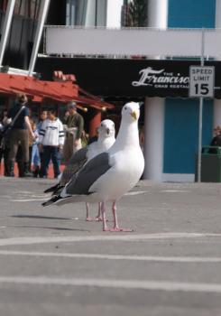 20070325_seagull2.jpg