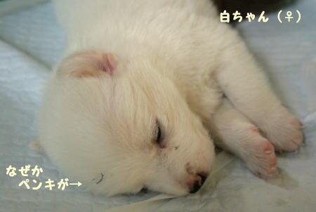 sirokuro4.jpg