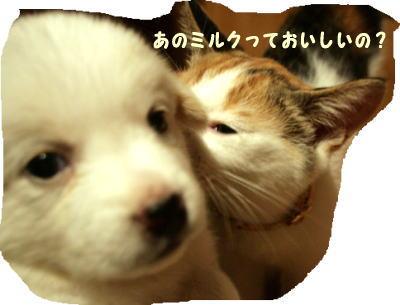 sirokuro5.jpg