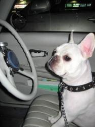 運転手アンディ