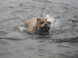 泳いだ!!