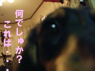 DSCN0101_20071027134154.jpg