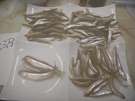 公魚に魅せられた人たちの記録72 127匹だった