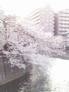 ウチから見た桜2012