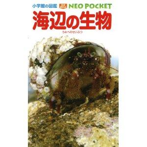 海辺の生物neo