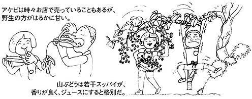 noyama_1.jpg