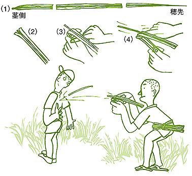 susukinoyatobashoi.jpg