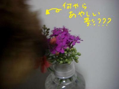 20070516153312.jpg