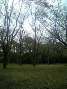 DVC00070_M.jpg