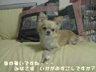 blog2007.6.30.jpg