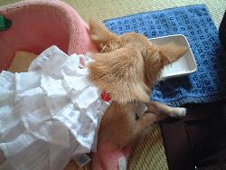 blog2007.7.19-2.jpg