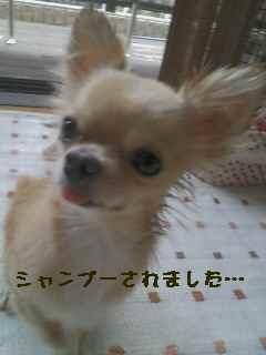 blog2007.9.2.jpg