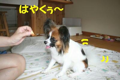 IMG_0996_1.jpg