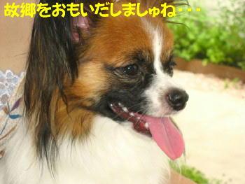 IMG_6791_1.jpg