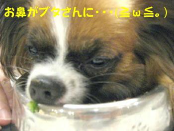 IMG_6837_1.jpg