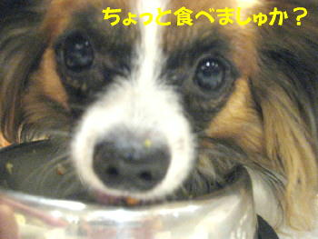 IMG_6840_1.jpg