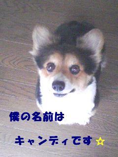 20070701161436.jpg