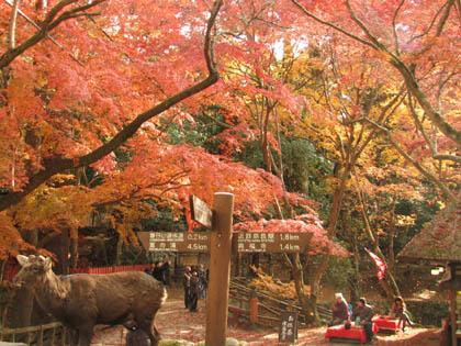 奈良・紅葉2005.12月3日