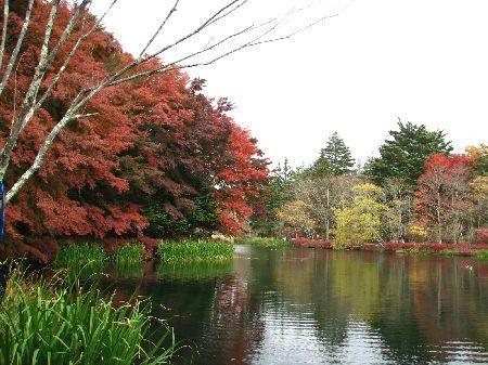 軽井沢・雲場池