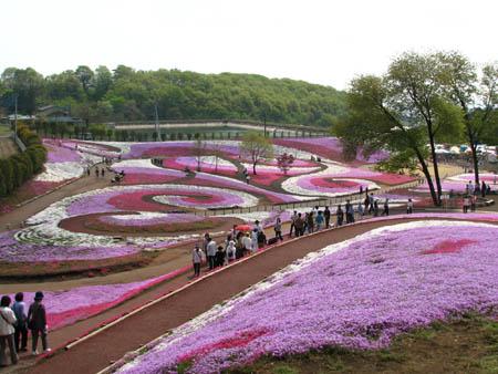 みさと芝桜公園2007
