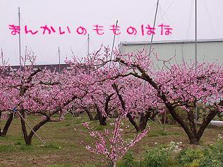 20070401101519.jpg