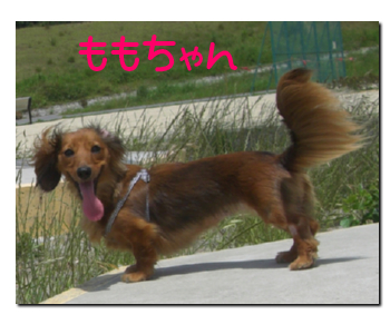 4wan_momo.jpg