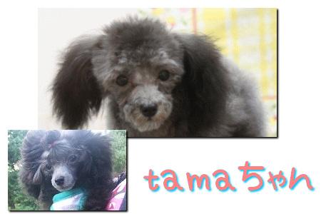 tama_01.jpg