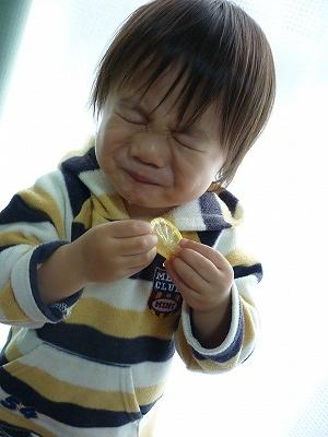初めてレモンを食べる【酸っぱい...