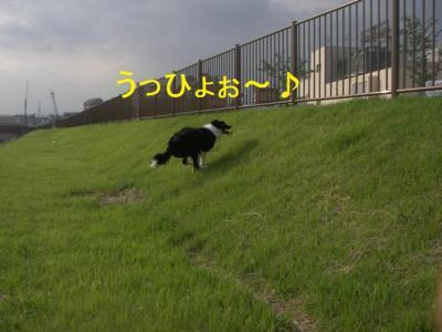 20070717234019.jpg