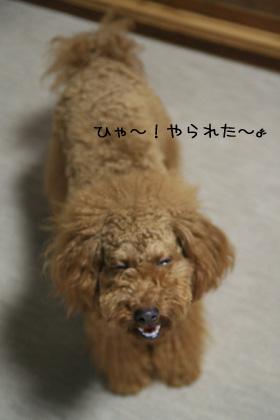 20070615-07.jpg