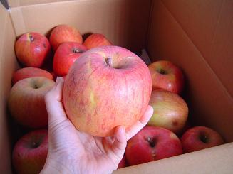 大きいリンゴ