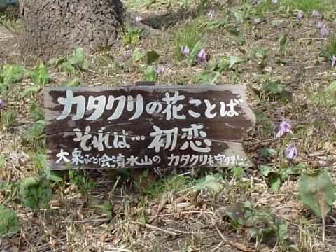 4月1日カタクリ群生地