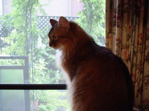 雨の庭を見るサラ