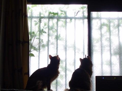 ヤモリを見つめるサラとしーちゃん