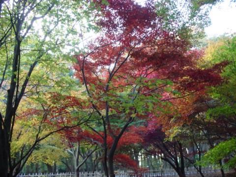 かえで園の紅葉