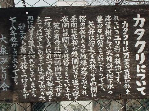 060321カタクリ群生地02