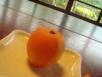 さいごに果物。びわ♪