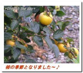 柿の実☆0710