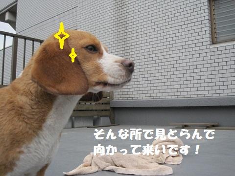 108_20110411083537.jpg