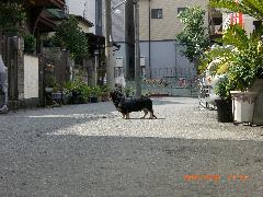 20060930018.jpg