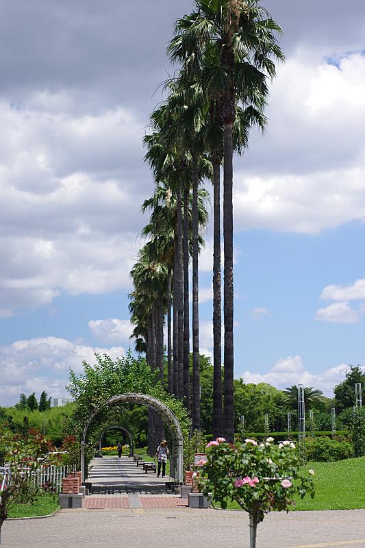 バラ園の並木