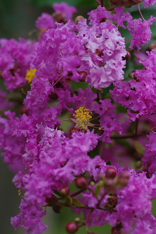 紫色の中に