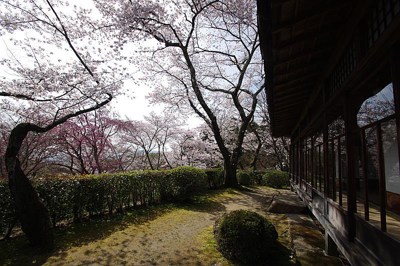 座敷の庭先