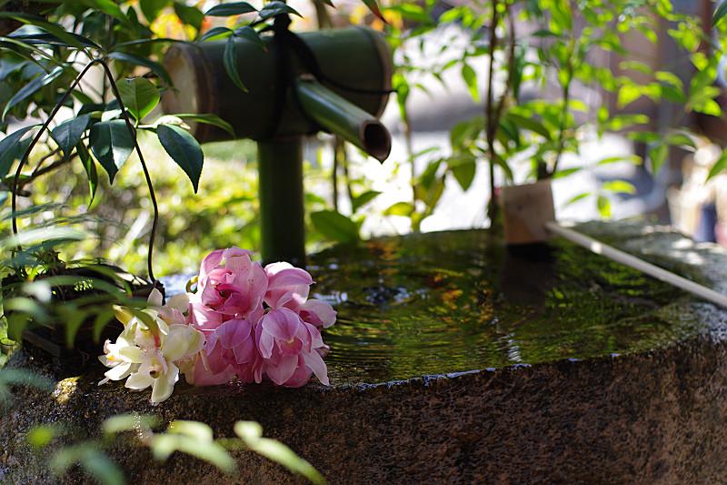 花の寺らしく