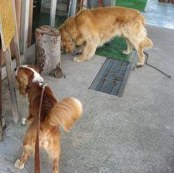 IMG_2385ホテル犬