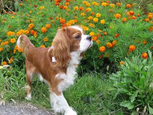 IMG_2578オレンジ花